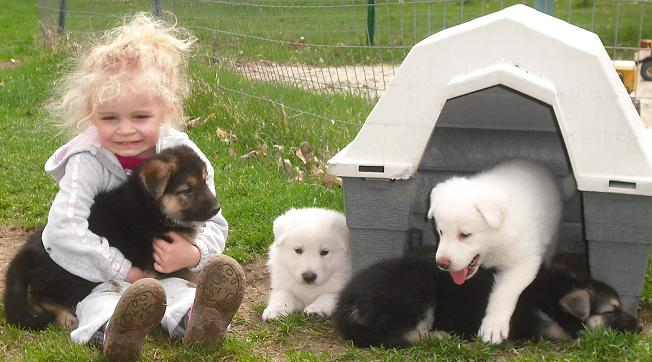 AKC GERMAN SHEPHERD PUPPIES!